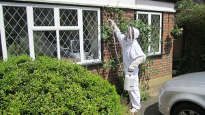 wasp nest removal in Lancing